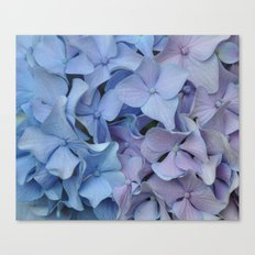 Two Tone Hydrangea Canvas Print