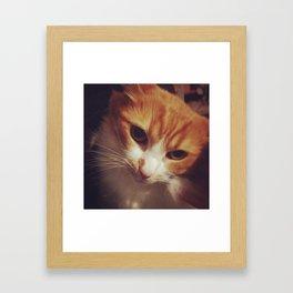 Beauty in a cat Framed Art Print