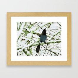 Steller's Jay in the Snow Framed Art Print