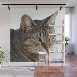 Stunning Tabby Cat Close Up Portrait Isolated Wall Mural