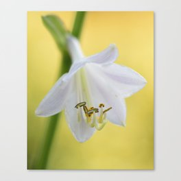 Paradigm Hosta Canvas Print