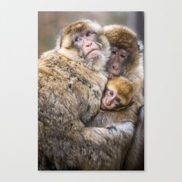 Cuddling Family Canvas Print