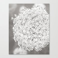 Queen Anne's Lace Flower in Soft Sepia Tones Canvas Print