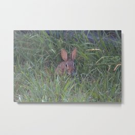 Rabbit in the Grass Metal Print