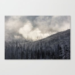 Steamy Forest -  Yellowstone National Park Canvas Print