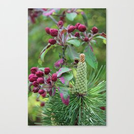 Apple tree and pinewood Canvas Print