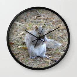 Gray Squirrel Munching on Pine Cones Wall Clock