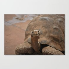 Galapagos Turtle Canvas Print