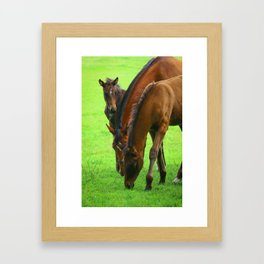 Horse Family with a Young Foal in Spring Framed Art Print