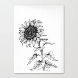 Sunflower Black and White Line Drawing, sunshine flower, pen and ink detail Canvas Print