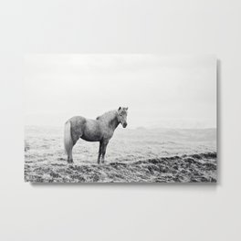 Horse in Icelandic Landscape Photograph Metal Print