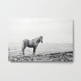 Horse in Icelandic Landscape Photograph Metal Print