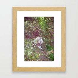 Wolf Relaxation Framed Art Print