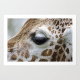 Eye of giraffe Art Print