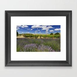 Countryside Vinyard Framed Art Print