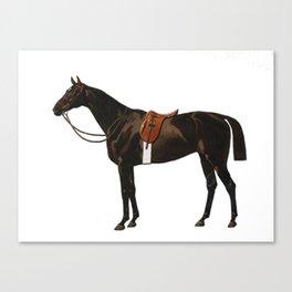 Vintage equestrian horse sketche decor Canvas Print
