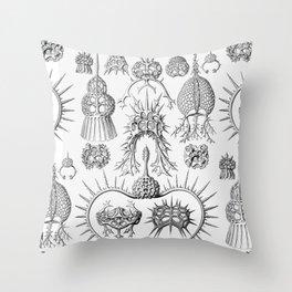 Ernst Haeckel - Spyroidea Throw Pillow