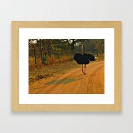 Ostrich Framed Art Print