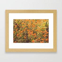 Orange wild flowers Framed Art Print