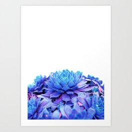 Ethereal Blue Hens and Chicks Art Print
