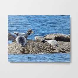 Seal Flips out on crowded rock Metal Print