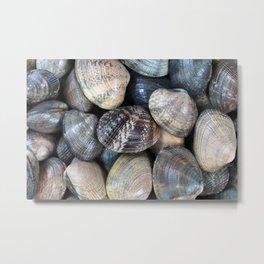 Fresh live clams in full frame format Metal Print