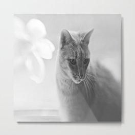 Winford Kitty Metal Print
