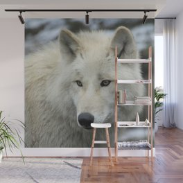 Wolf_013_by_JAMFoto Wall Mural