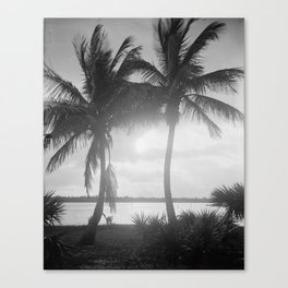 Black and White Florida Palm Trees Photograph (1915) Canvas Print