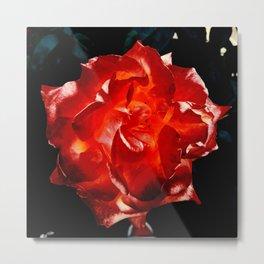 Roses flower Metal Print