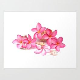 Frangipani blooms on sea shells Art Print