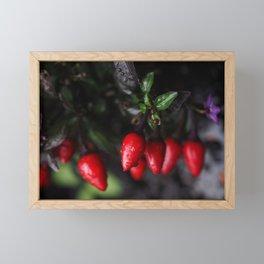 Red Hot Garden Salsa Chili Peppers. Framed Mini Art Print