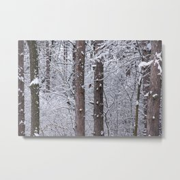 Snow Robin Metal Print