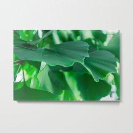 Ginkgo biloba leaves Metal Print