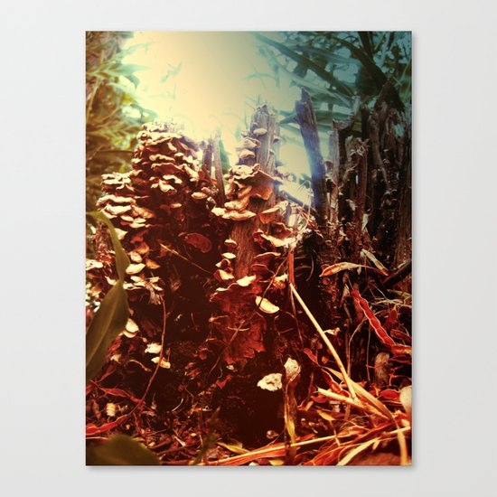 fantastic forest mushrooms Canvas Print