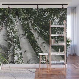 Birch Tree Forest By Magda Opoka Wall Mural