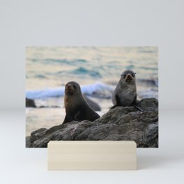 Seal Pair, Kaikoura Mini Art Print