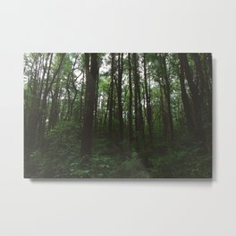 Forest Trail XXXII Metal Print