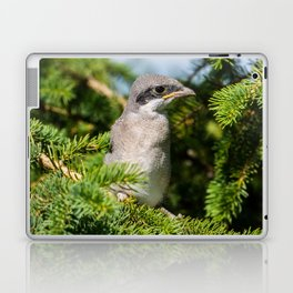 Fledgling Loggerhead Shrike Laptop & iPad Skin