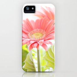 Gerber Daisies Flower iPhone Case