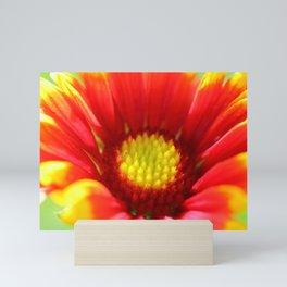 Gaillardia flower macro Mini Art Print