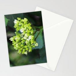 Heart - Hydrangea Stationery Cards