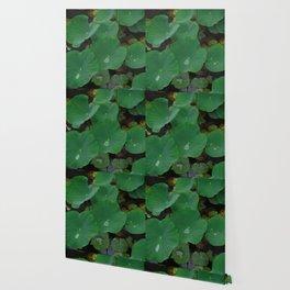 Pond Pads Wallpaper