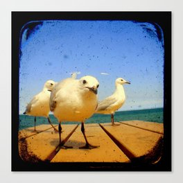 Seagulls - number 4 from set of 4 Canvas Print
