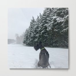 Snow and Schnauzer Metal Print