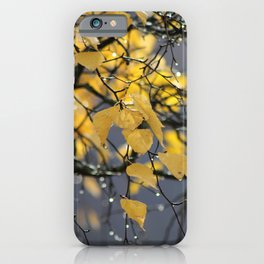Golden Birch Leaves in the Fall iPhone Case