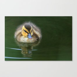 Floating Fluff Canvas Print