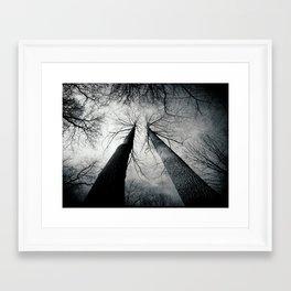 Trees in the Mist Framed Art Print