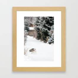 Exploring Husky Framed Art Print