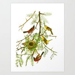 Orchard Oriole Bird Art Print